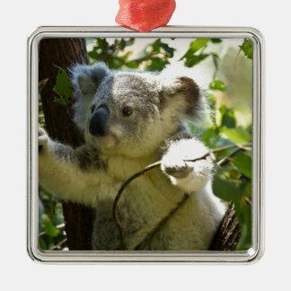 Cute Koala Aussi Outback Safari Zoo Park Colorful Christmas Ornaments