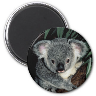 Cute Koala Bear 2 Inch Round Magnet