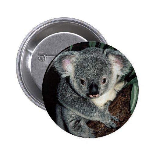 Cute Koala Bear Button