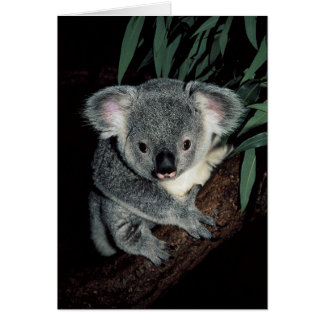 Cute Koala Bear Card