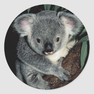 Cute Koala Bear Classic Round Sticker
