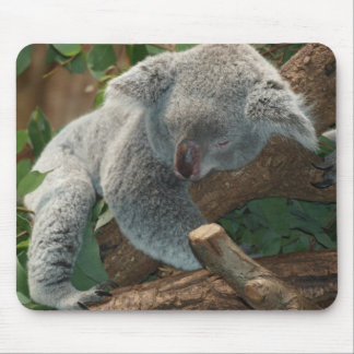 Cute Koala Bear Destiny Nature Aussi Outback Mouse Pad