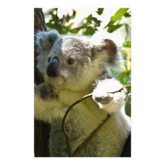 Cute Koala Bear Destiny Nature Aussi Outback Stationery