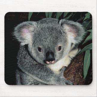 Cute Koala Bear Mouse Pad