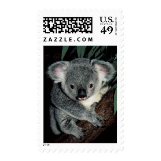 Cute Koala Bear Postage Stamps