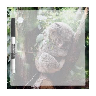 Cute Koala Bear relaxing in a Tree Dry Erase Board
