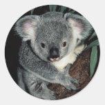 Cute Koala Bear Round Stickers