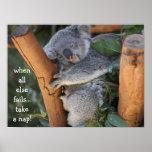 Cute Koala Bear, when all else fails take a nap Print