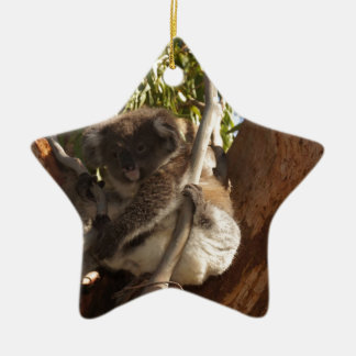 Cute Koala Bears Aussi Outback Safari Nature Art Christmas Ornaments