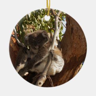 Cute Koala Bears Aussi Outback Safari Nature Art Ornament