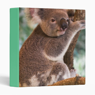 Cute Koala Binder