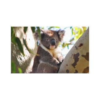 Cute Koala Gallery Wrap Canvas