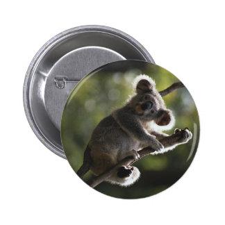 Cute Koala Climbing 2 Inch Round Button