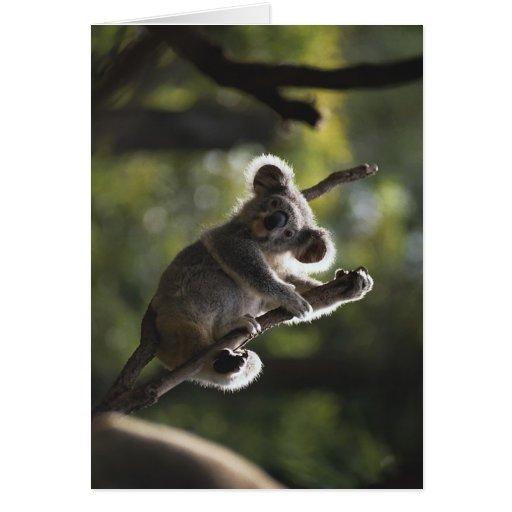 Cute Koala Climbing Greeting Card