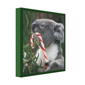 Cute Koala Eating Candy Cane Stretched Canvas Prints
