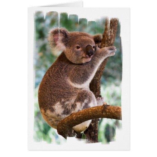 Cute Koala Greeting Cards