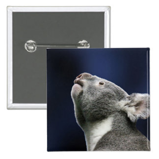Cute Koala looking up in wonder 2 Inch Square Button