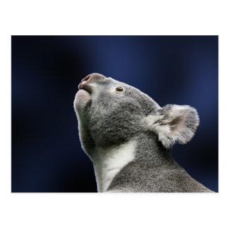 Cute Koala looking up in wonder Postcard