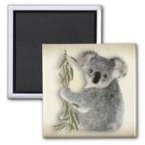 Cute Koala Magnet