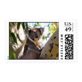 Cute Koala Postage