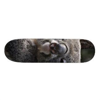 cute koala skate decks