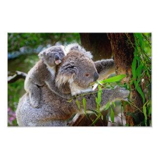 Cute Koalas Photographic Print