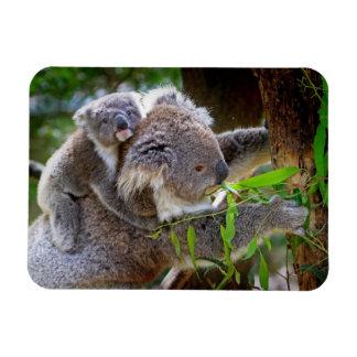 Cute Koalas Rectangular Photo Magnet