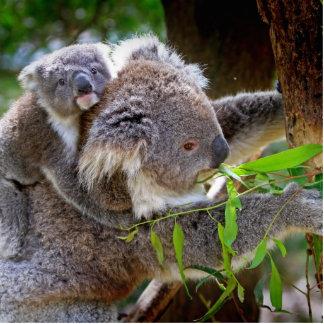 Cute Koalas Standing Photo Sculpture
