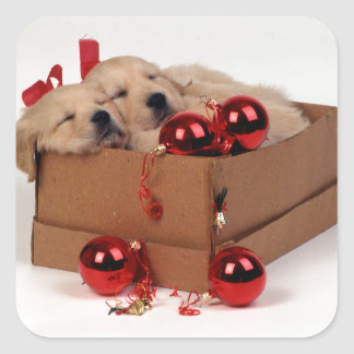 Cute Labrador puppies with x-mas baubles Square Sticker