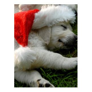 Cute labrador puppy with x-mas hat postcard