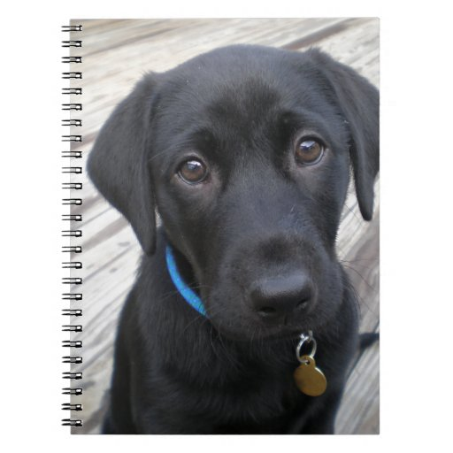 Cute labs notebooks