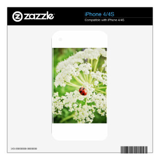 cute Lady bug iPhone 4S Decal