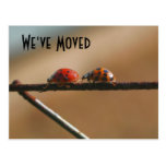 Cute Ladybugs New Address Nature Postcard