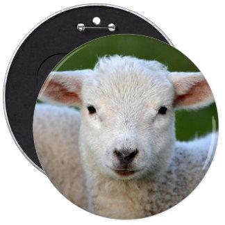Cute lamb portrait pinback buttons