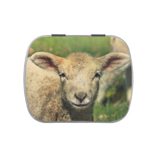 Cute lamb portrait jelly belly candy tins
