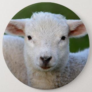 Cute lamb portrait pinback button