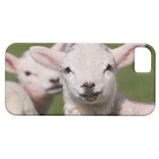Cute lambs iPhone 5 Case