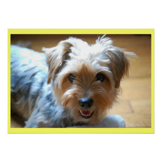 Cute laughing yorkie puppy dog yorkshire terrier poster