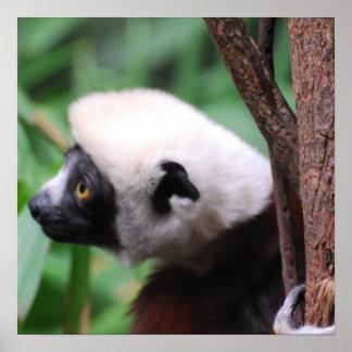 Cute Lemur Poster