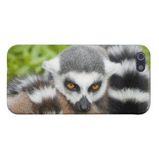Cute Lemur Stripey Case For iPhone SE/5/5s