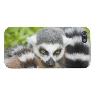Cute Lemur Stripey Cover For iPhone SE/5/5s