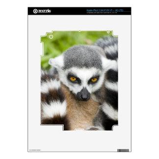 Cute Lemur Stripey iPad 3 Skin