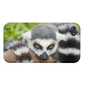 Cute Lemur Stripey iPhone 4 Case
