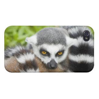 Cute Lemur Stripey iPhone 4 Cases