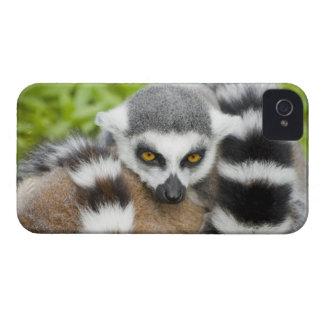 Cute Lemur Stripey Tail Case-Mate iPhone 4 Case