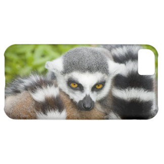 Cute Lemur Stripey Tail Cover For iPhone 5C