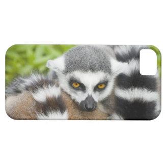 Cute Lemur Stripey Tail iPhone SE/5/5s Case