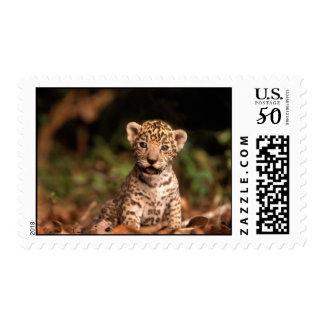 Cute Leopard Cub Postage