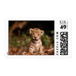 Cute Leopard Cub Postage Stamp