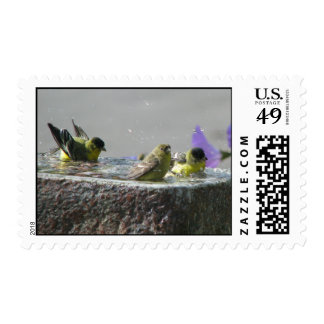 Cute Lesser Goldfinches Postage Stamps